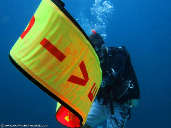 PADI IDC, Delayed SMB Specialty Instructor, Platinum Course Director, Divemaster, IDC